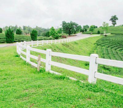 White fence on tea farm